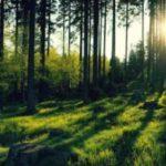 Солнце село за верхушки