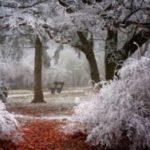 Зима пришла, увы, без снега