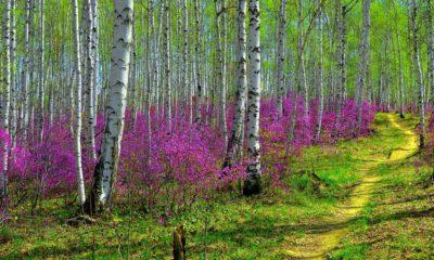 ранняя-весна
