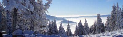тайга-зимой