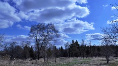 oblaka-vesna-les (1)