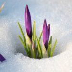 Зимы рубеж преодолён