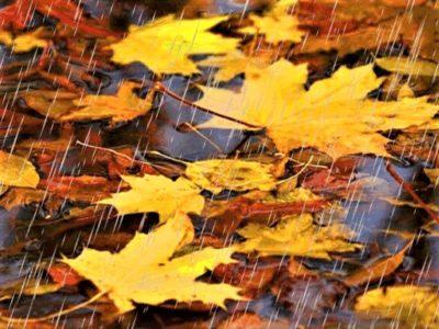 Дождь непрестанный, желтеет листва