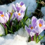 Весенний вальс цветов. Март