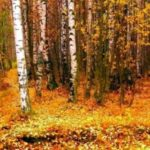 Октябрь багрянцами зарделся
